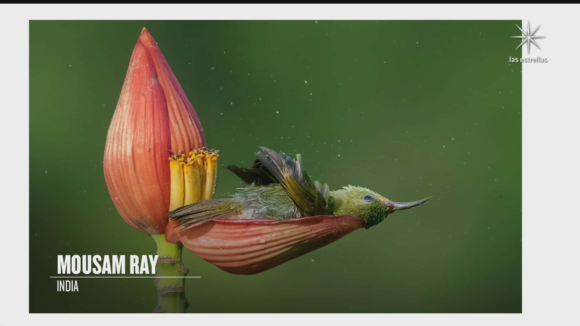 anuncian ganadores del concurso de bird photographer of the year