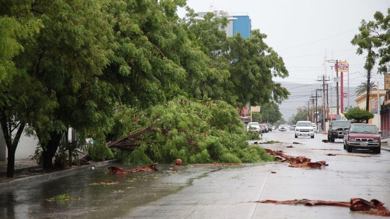 Caída de árboles tras el paso de Olaf en La Paz, Baja California (Cuartoscuro)