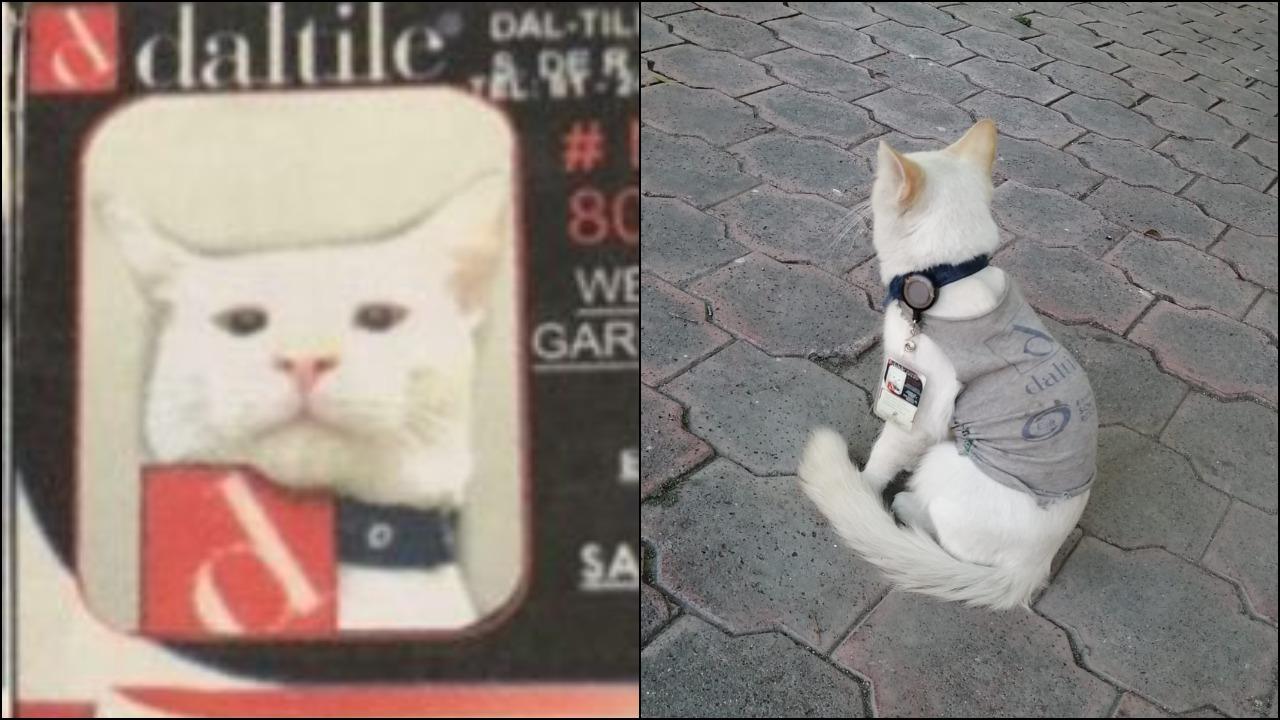 Gato se hace viral tras recibir gafete de una empresa en Nuevo León