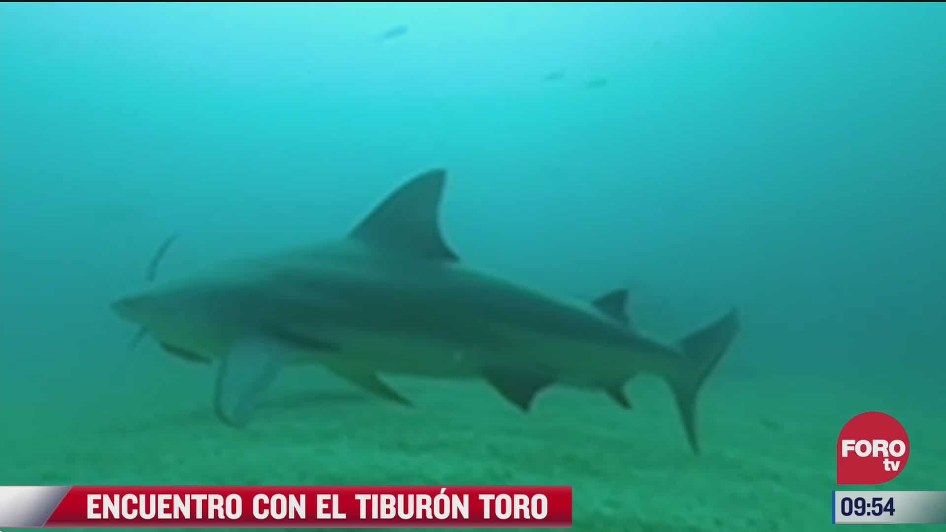 encuentro con el tiburon toro en los cabos baja california sur
