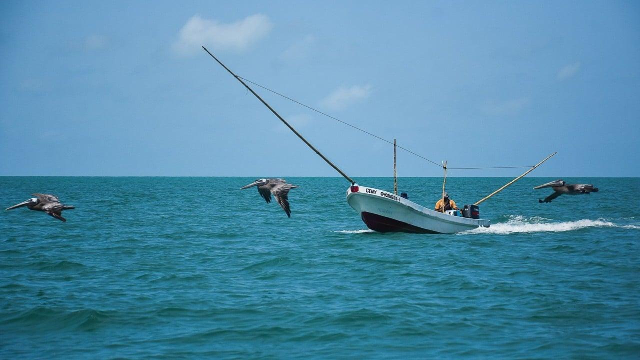 Comienza la temporada de pesca de camarón en México tras 6 meses de veda