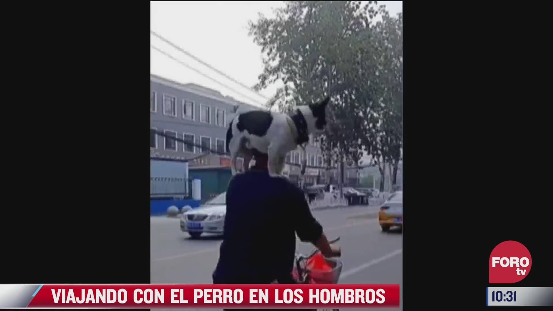 hombre viaja en bicicleta con su perro sobre los hombros