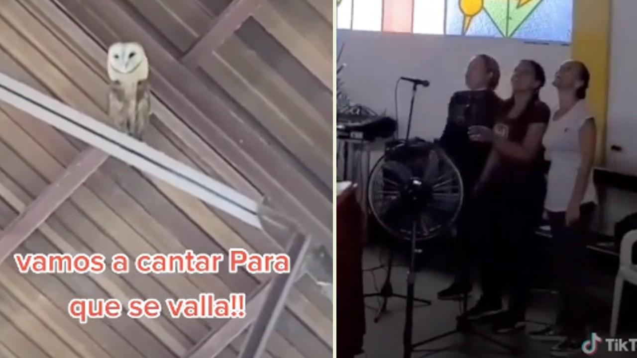 Lechuza baila iglesia video TikTok
