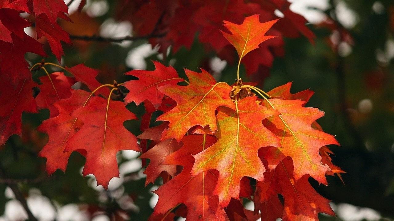 otoño, equinoccio, astronomía, naturaleza, imagen ilustrativa