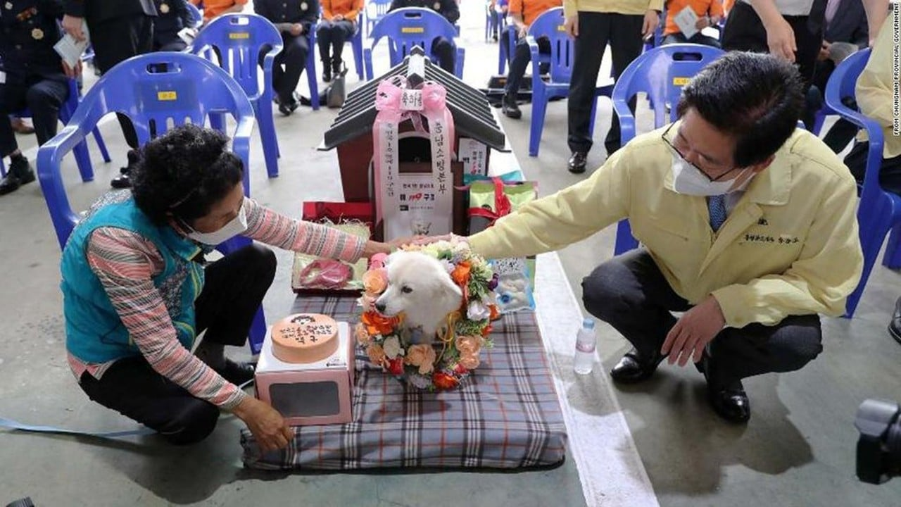 Perrito salva a su dueña de morir de hipotermia; recibe reconocimiento a su heroísmo