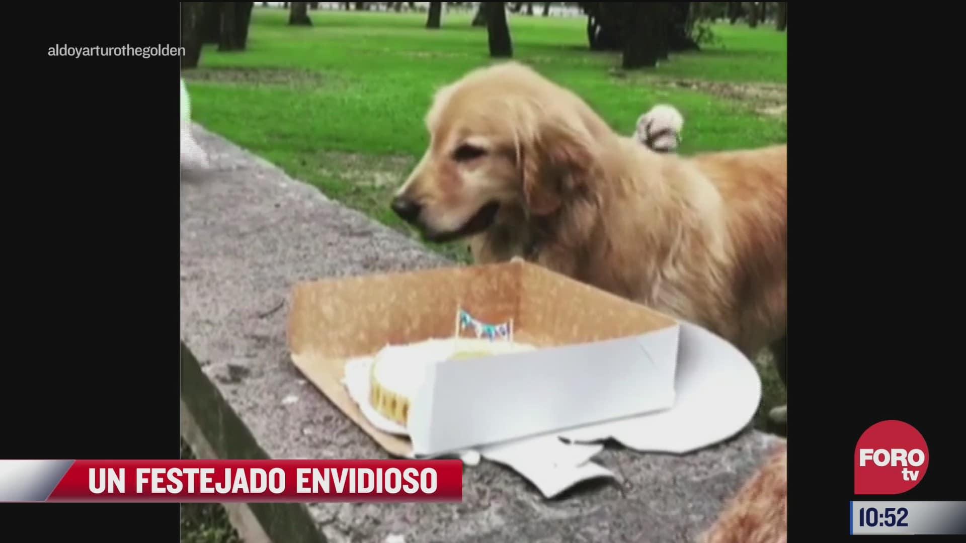 perro envidioso con su pastel
