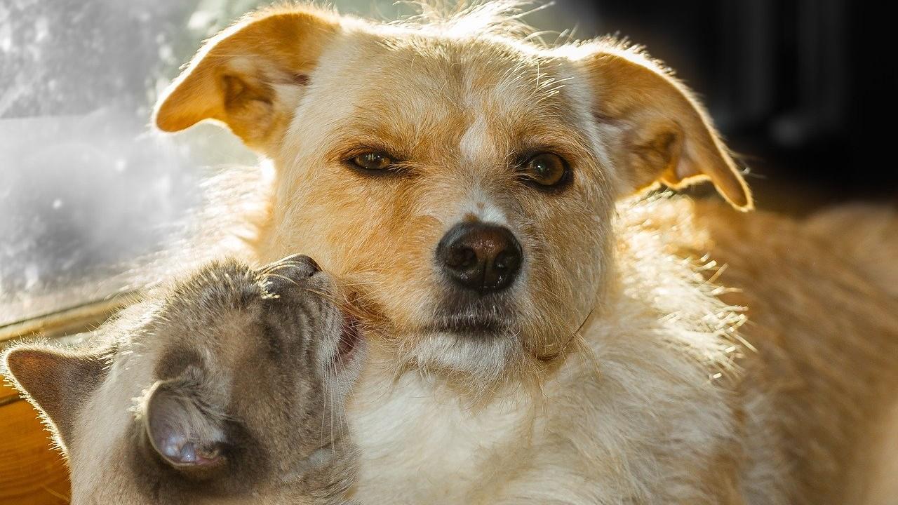 RUAC, mascotas, perros, gobierno CDMX, imagen ilustrativa