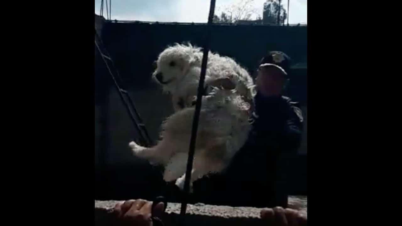 Policías rescatan perrito inundación Tula