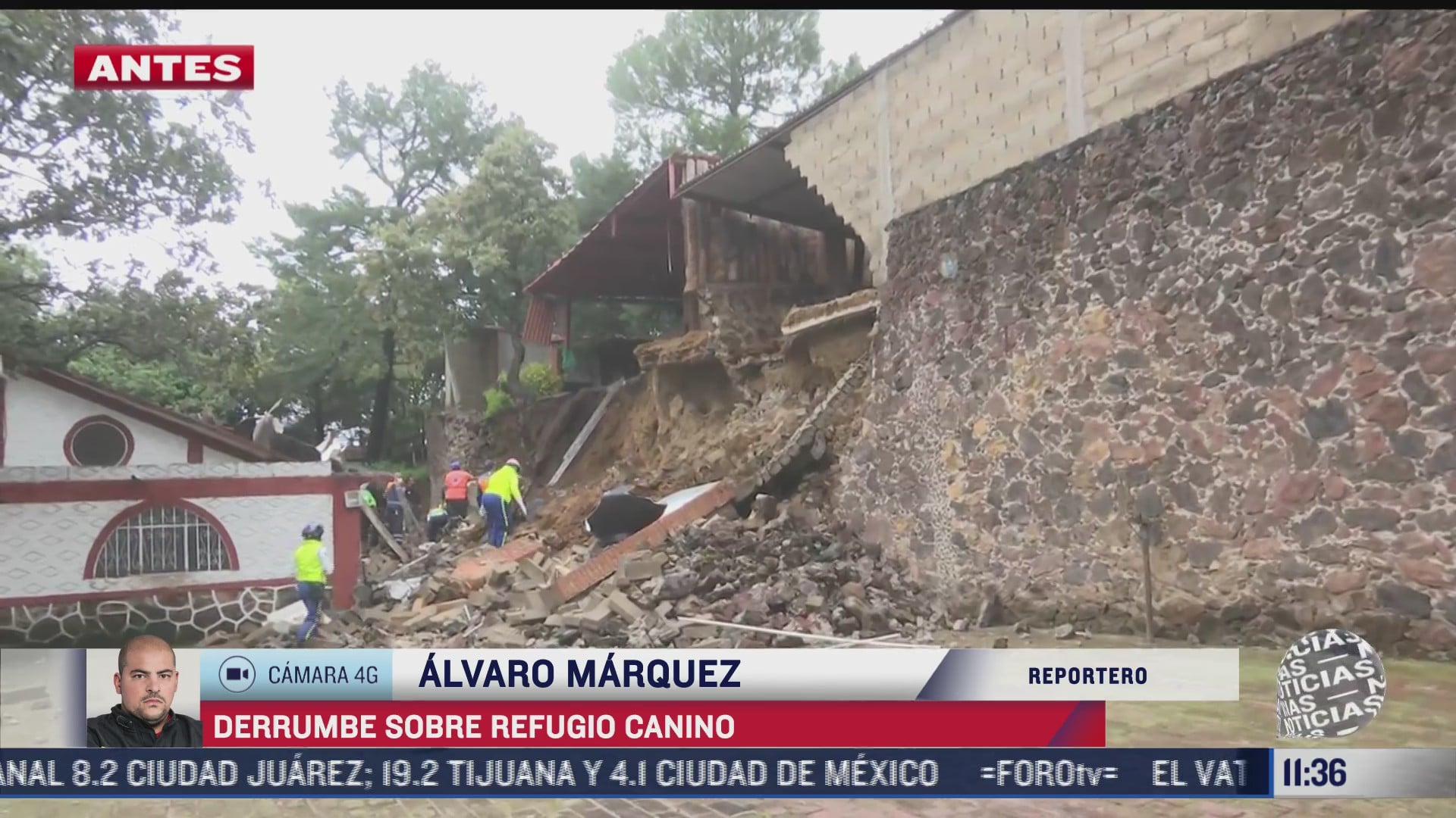 se registra derrumbe sobre refugio de perros en xochimilco cdmx