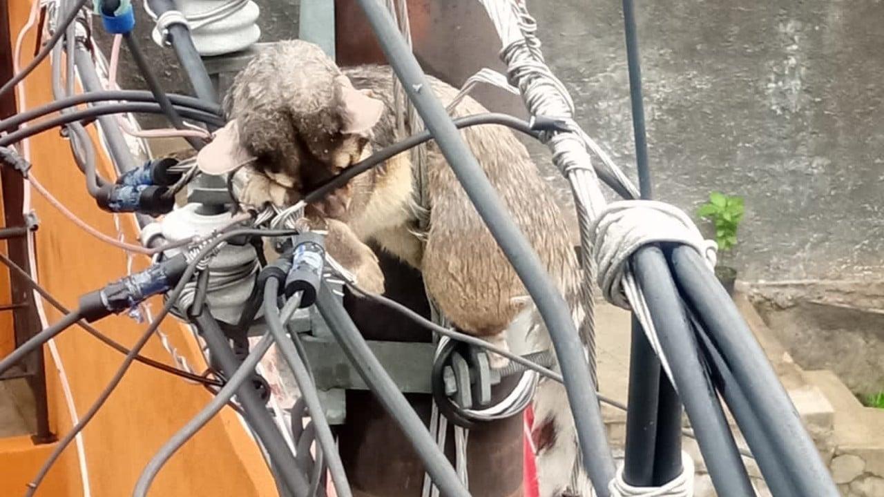 Funicular en Álvaro Obregón reanuda operaciones tras corto circuito ocasionado por un cacomixtle