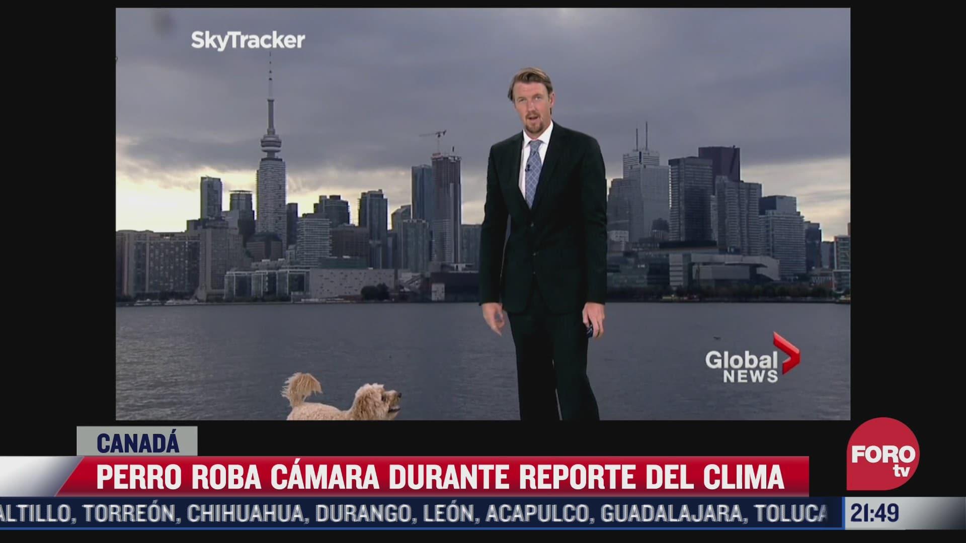video perrito roba camara en noticiero canadiense
