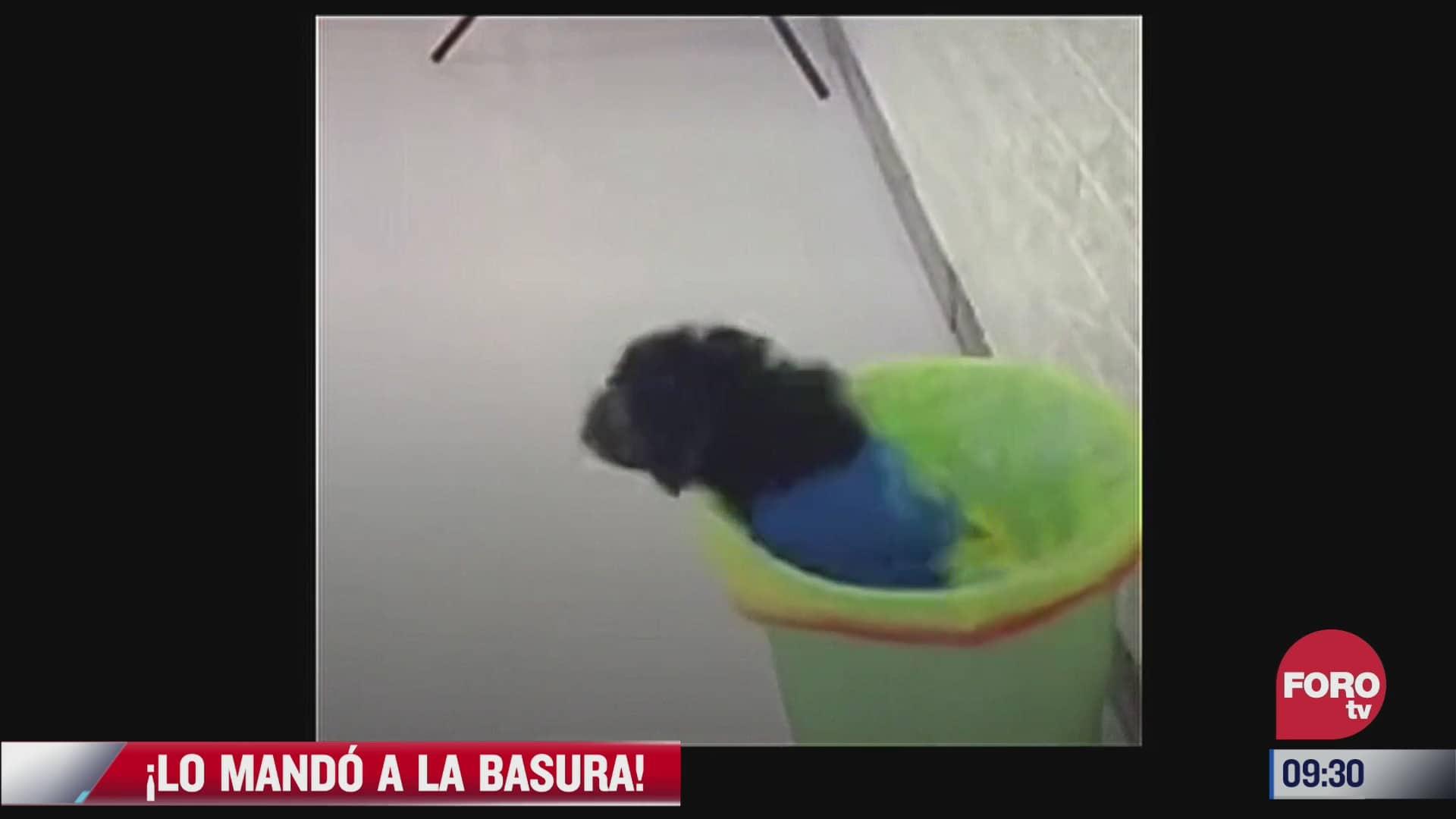video perro tira a su amigo al bote de la basura