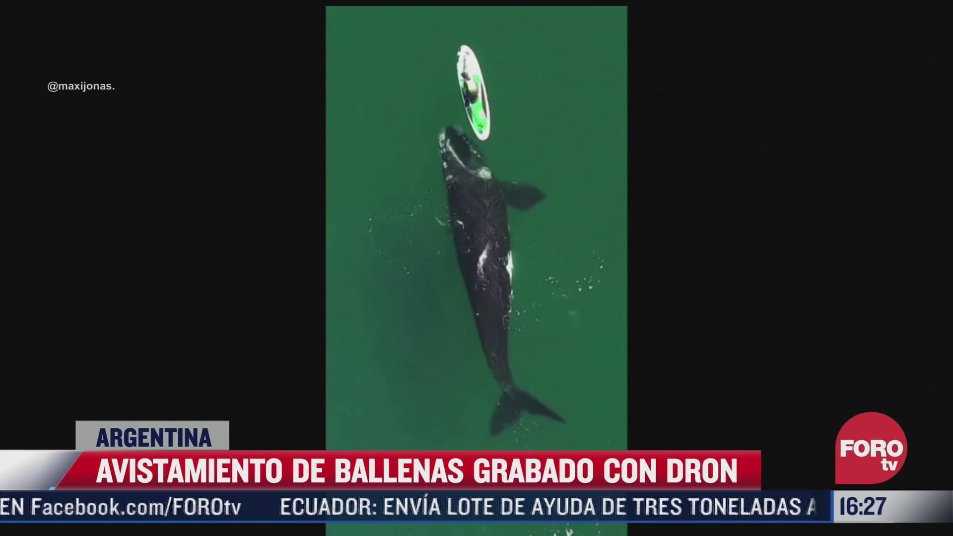 video un dron capta ballena nadando cerca de mujer en argentina