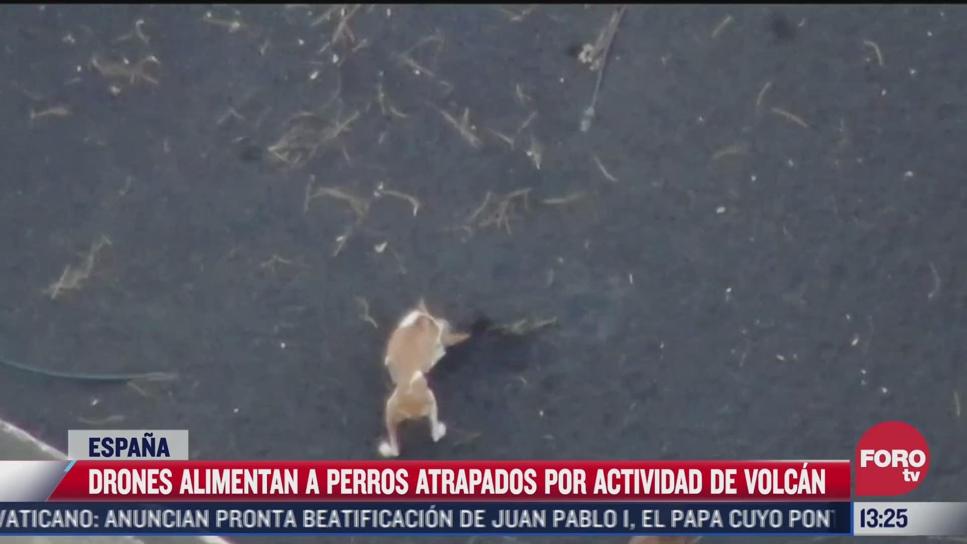 alimentan con drones a perros atrapados por actividad del volcan cumbre vieja espana