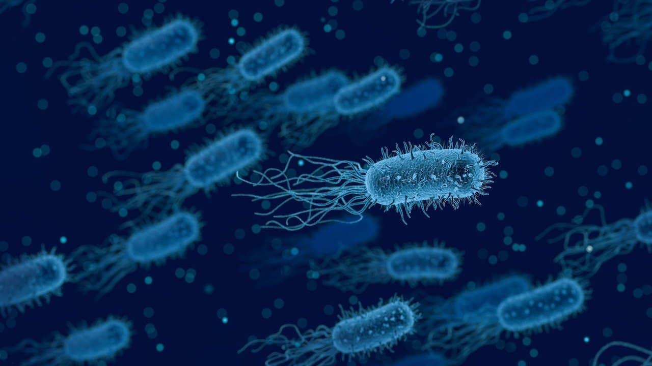 Bacteria comecarne transmisión sexual