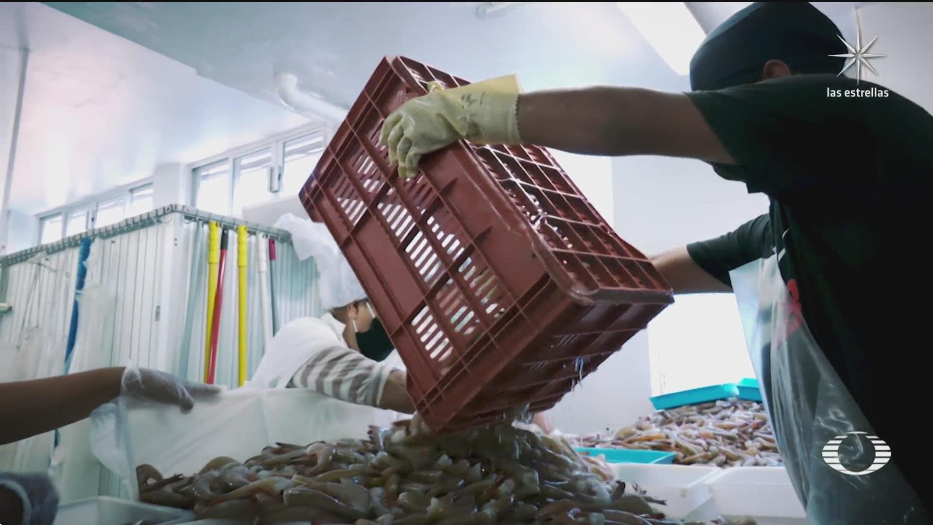 camaron silvestre capturado en aguas mexicanas podra ser exportado a eeuu