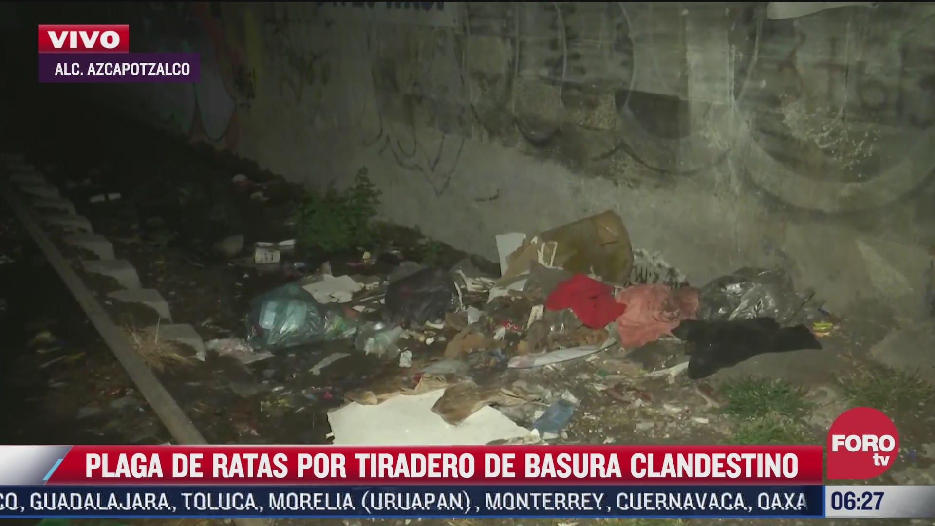 captan plaga de ratas en tiradero clandestino de basura en azcapotzalco