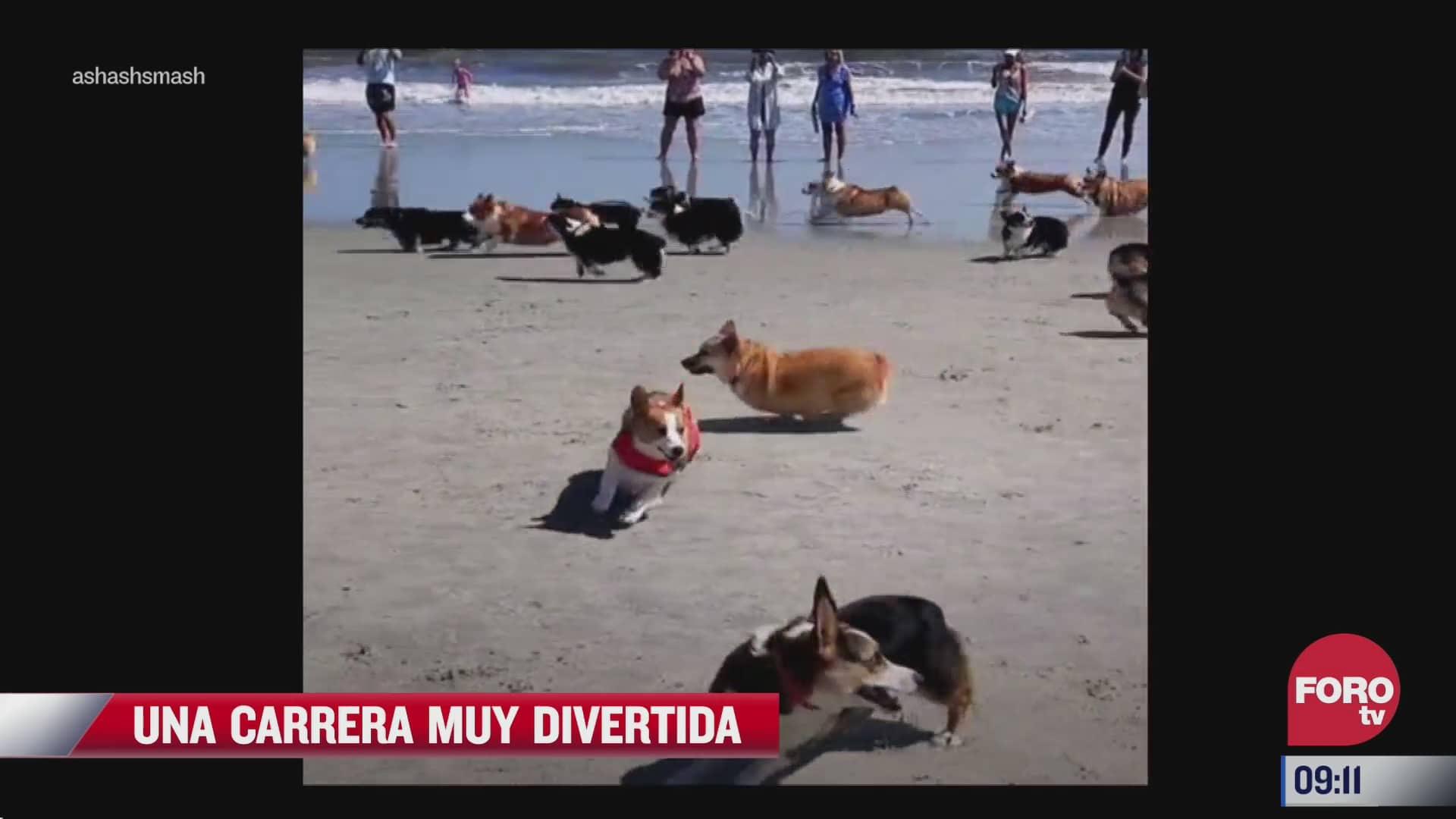carrera de perros en la playa