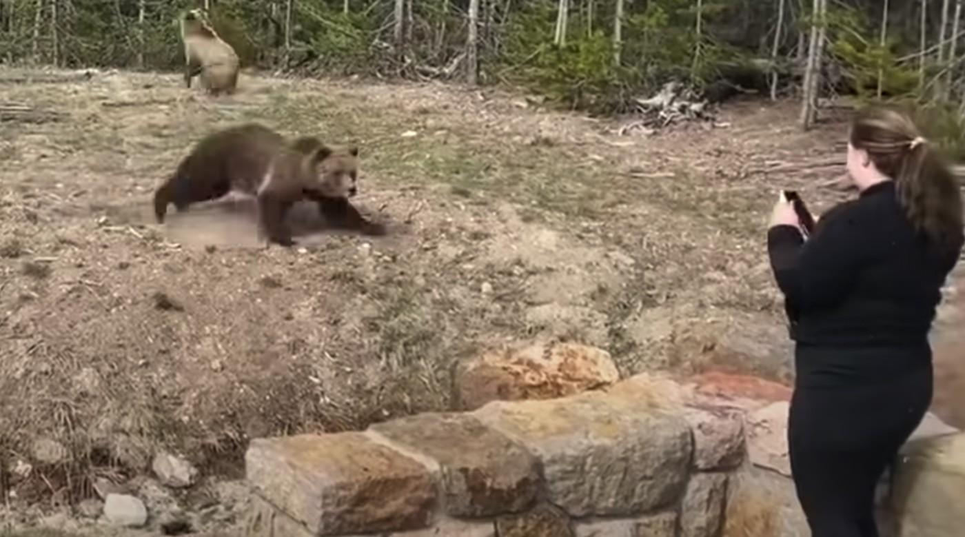 Dan 4 días de cárcel a mujer que fotografió a oso grizzly.