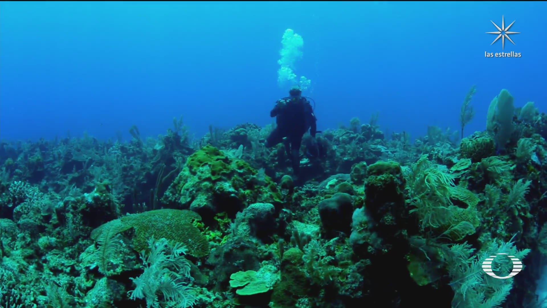 documentan la perdida del coral en el mundo