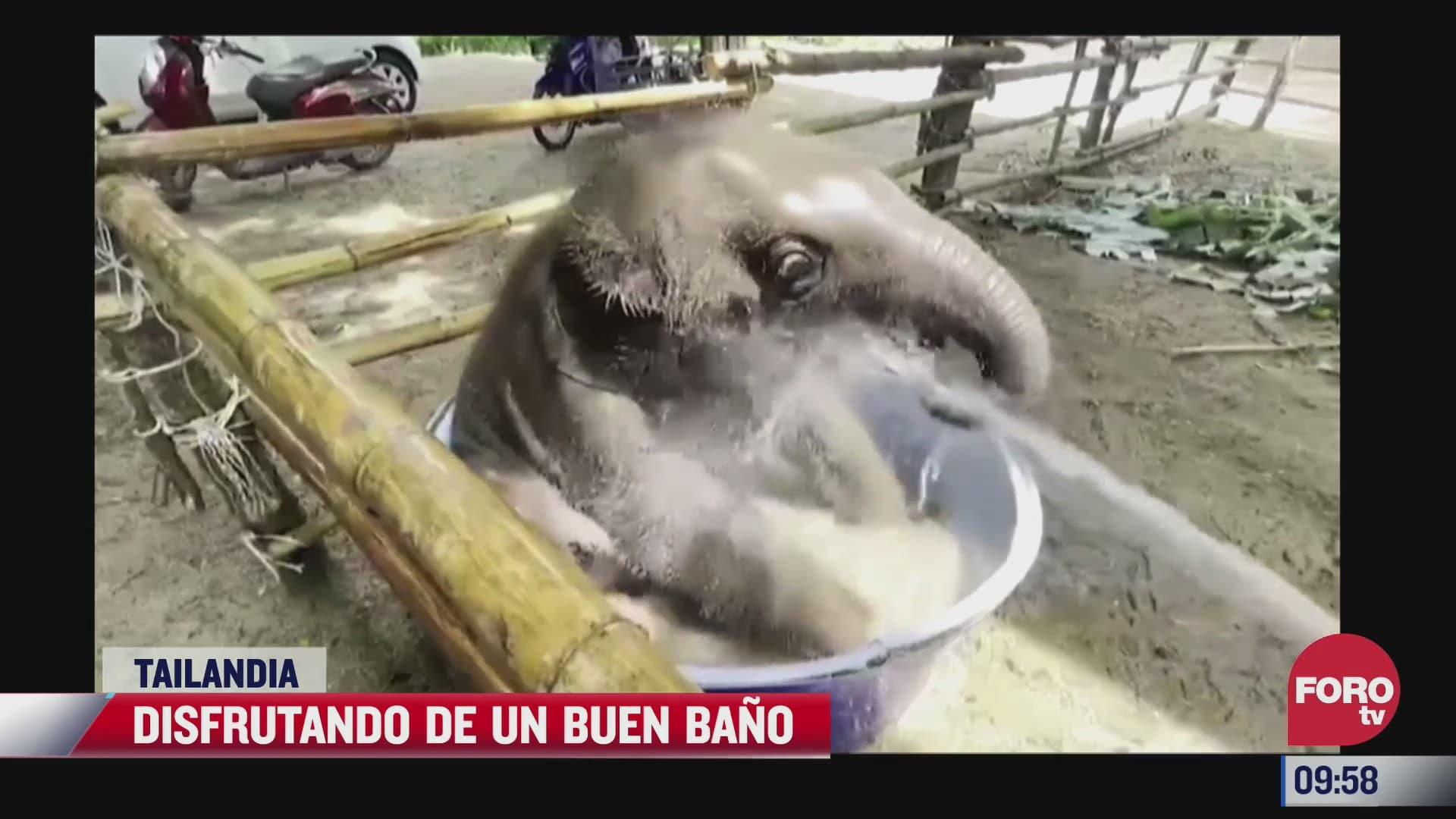 elefantito disfruta de su bano
