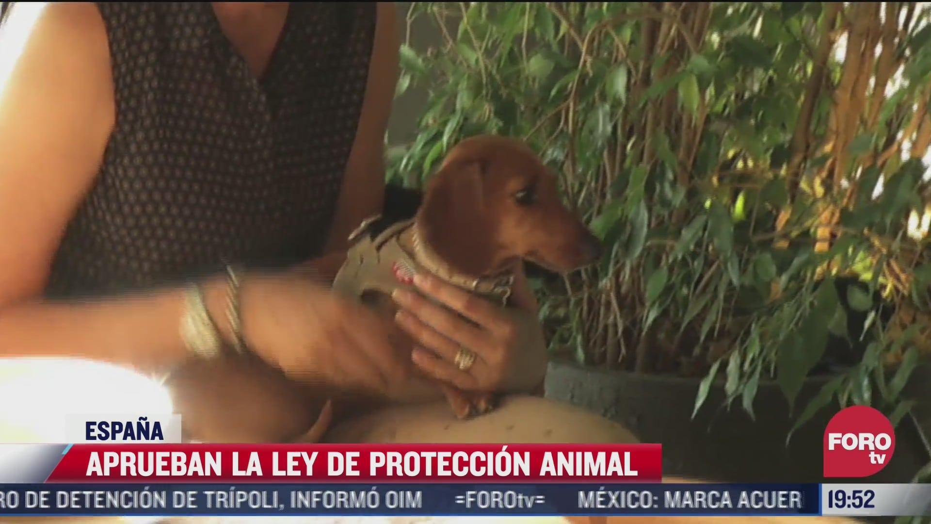 espana aprueba ley de proteccion a animal
