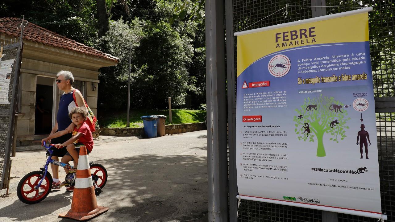 Fiebre amarilla, enfermedad endémica en países sudamericanos