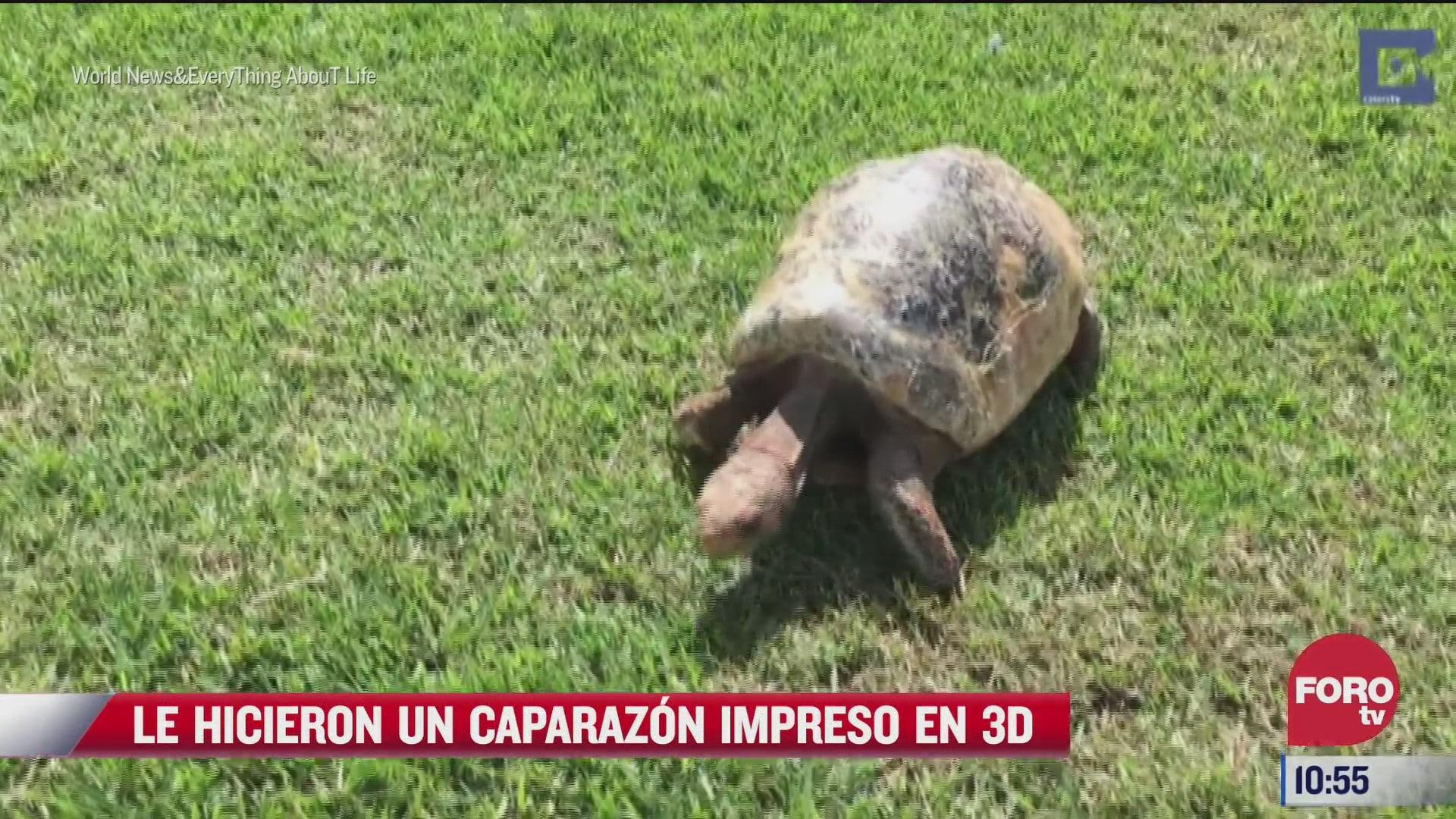 freddy la tortuga con el primer caparazon del mundo en 3d