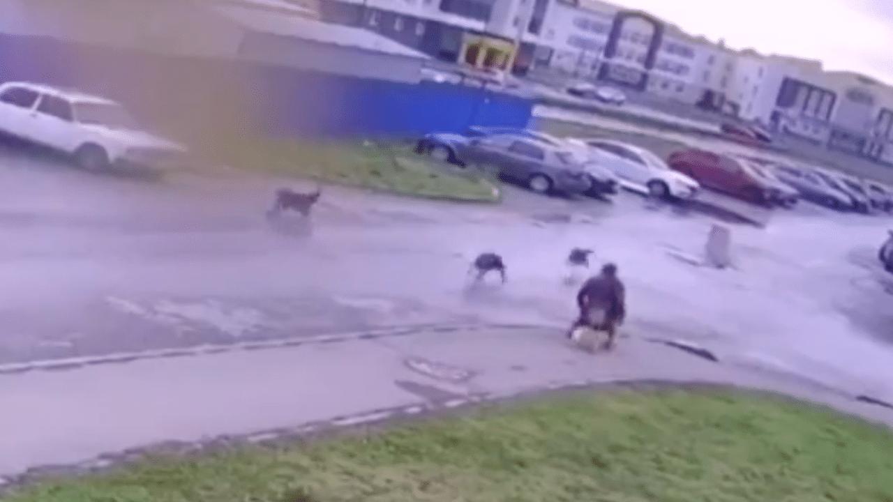 Hombre silla de ruedas mascota ataque perros
