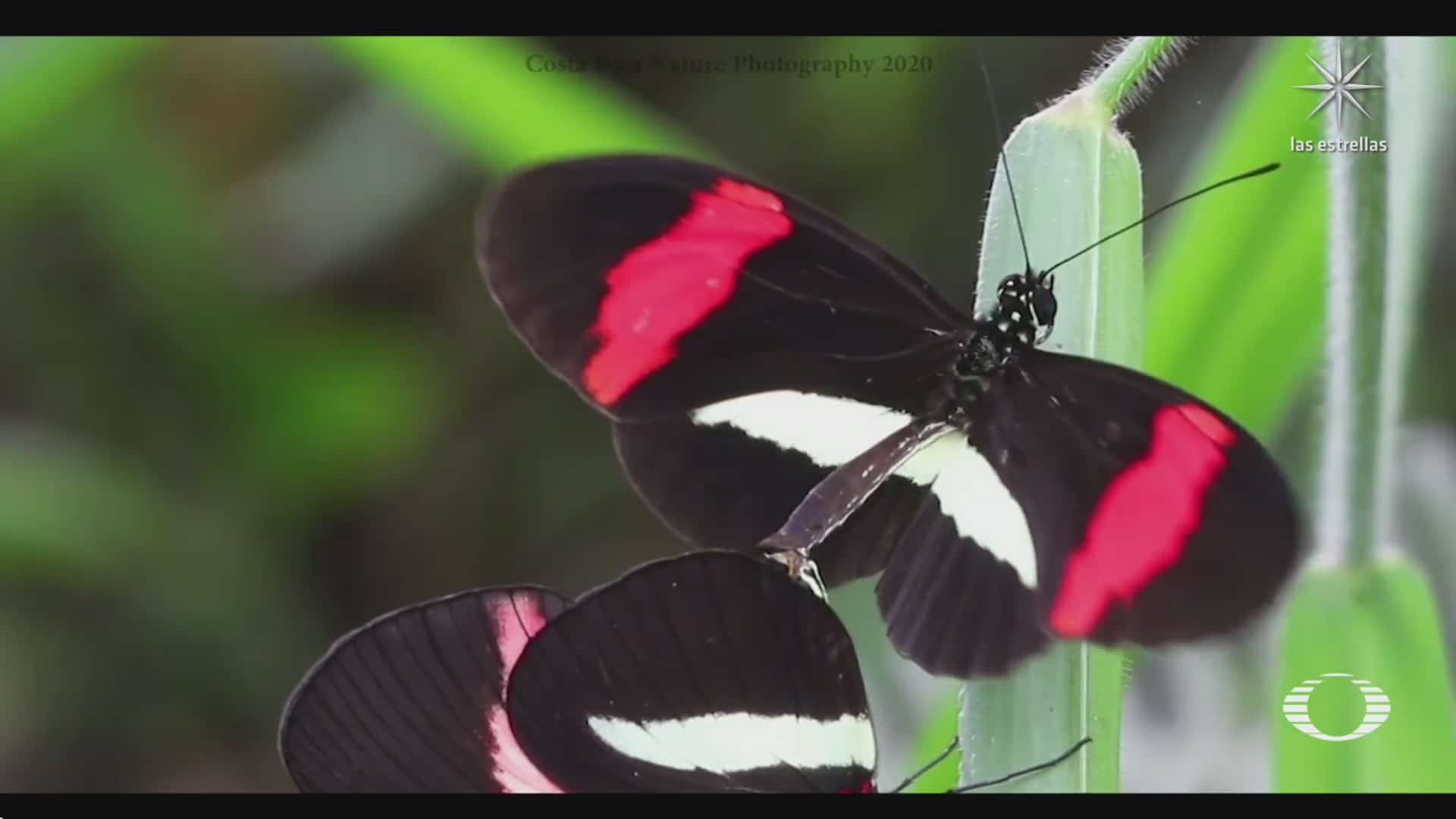 mariposas hembras pueden percibir mas colores del espectro ultravioleta que los machos