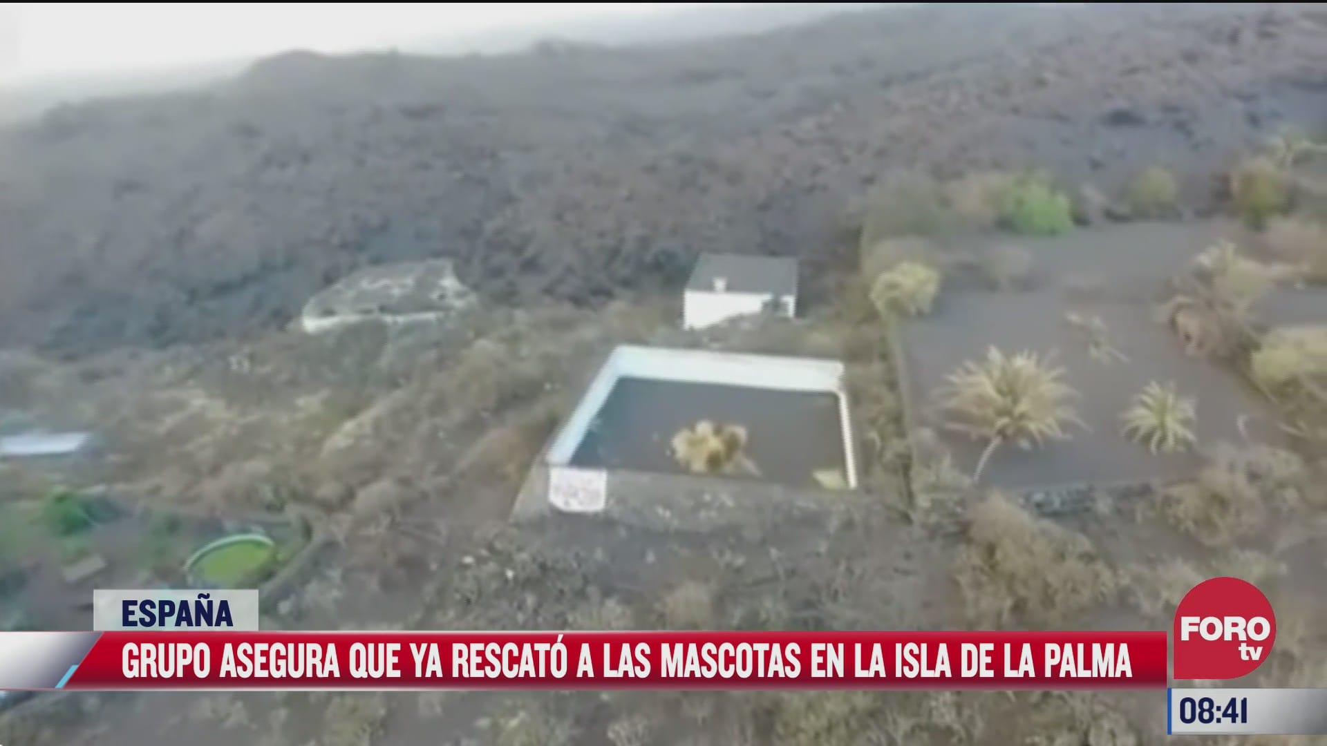 misterioso grupo afirma haber rescatado a perros atrapados por erupcion de volcan en la palma