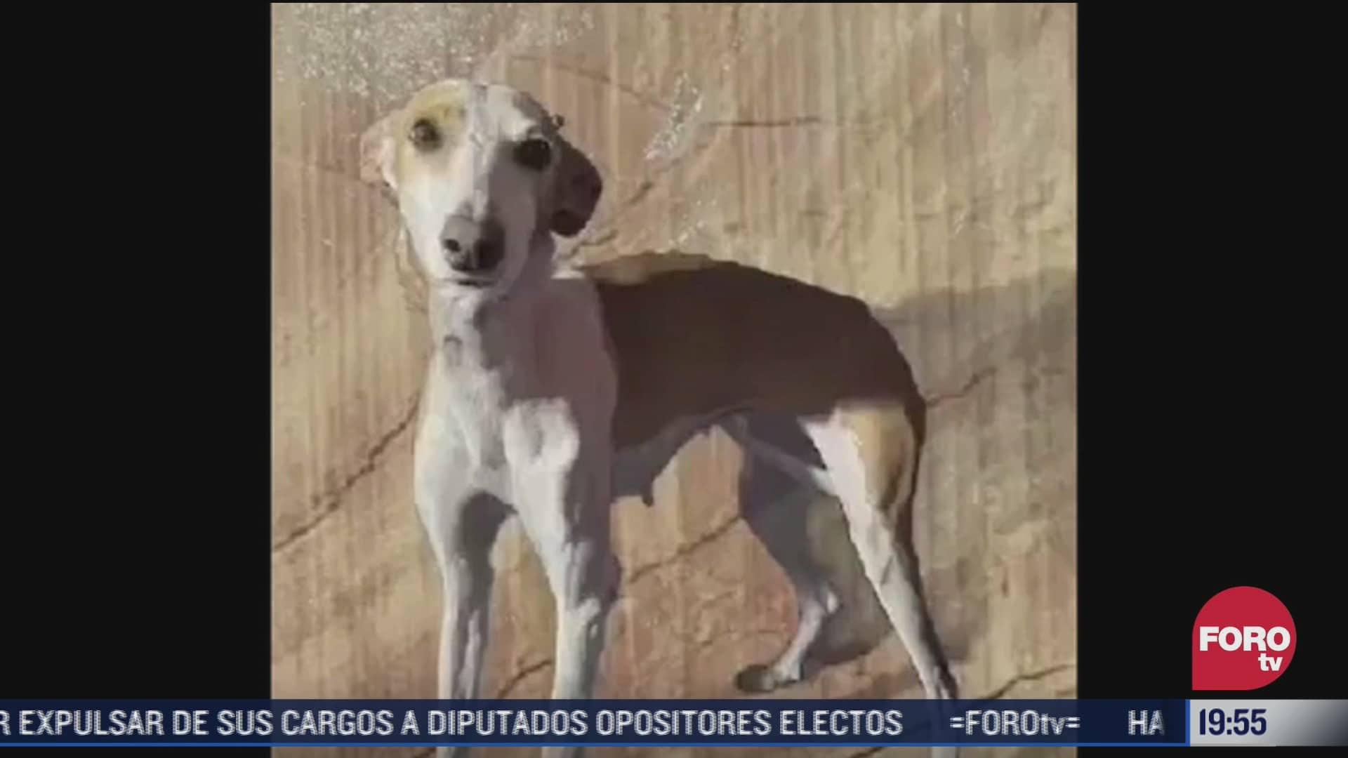 misterioso grupo rescata a perros atrapados por erupcion del volcan cumbre vieja