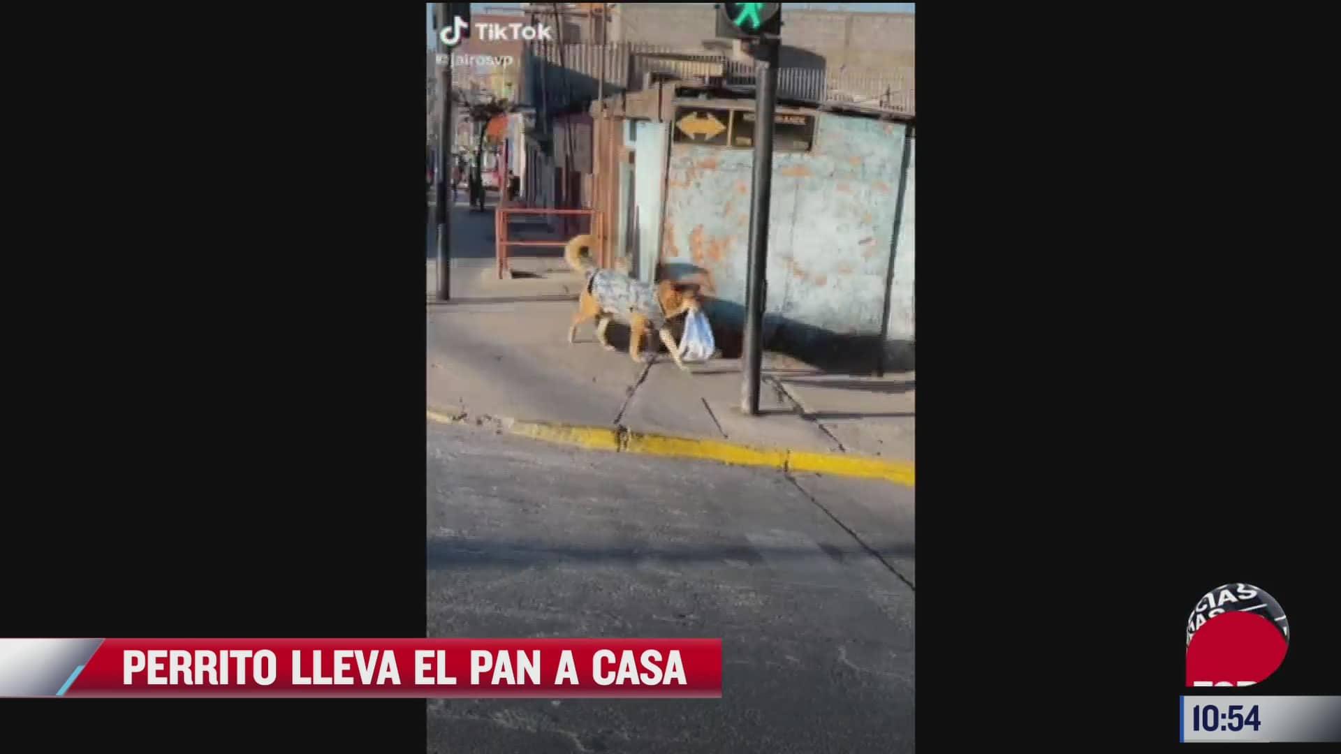 perrito lleva el pan a casa
