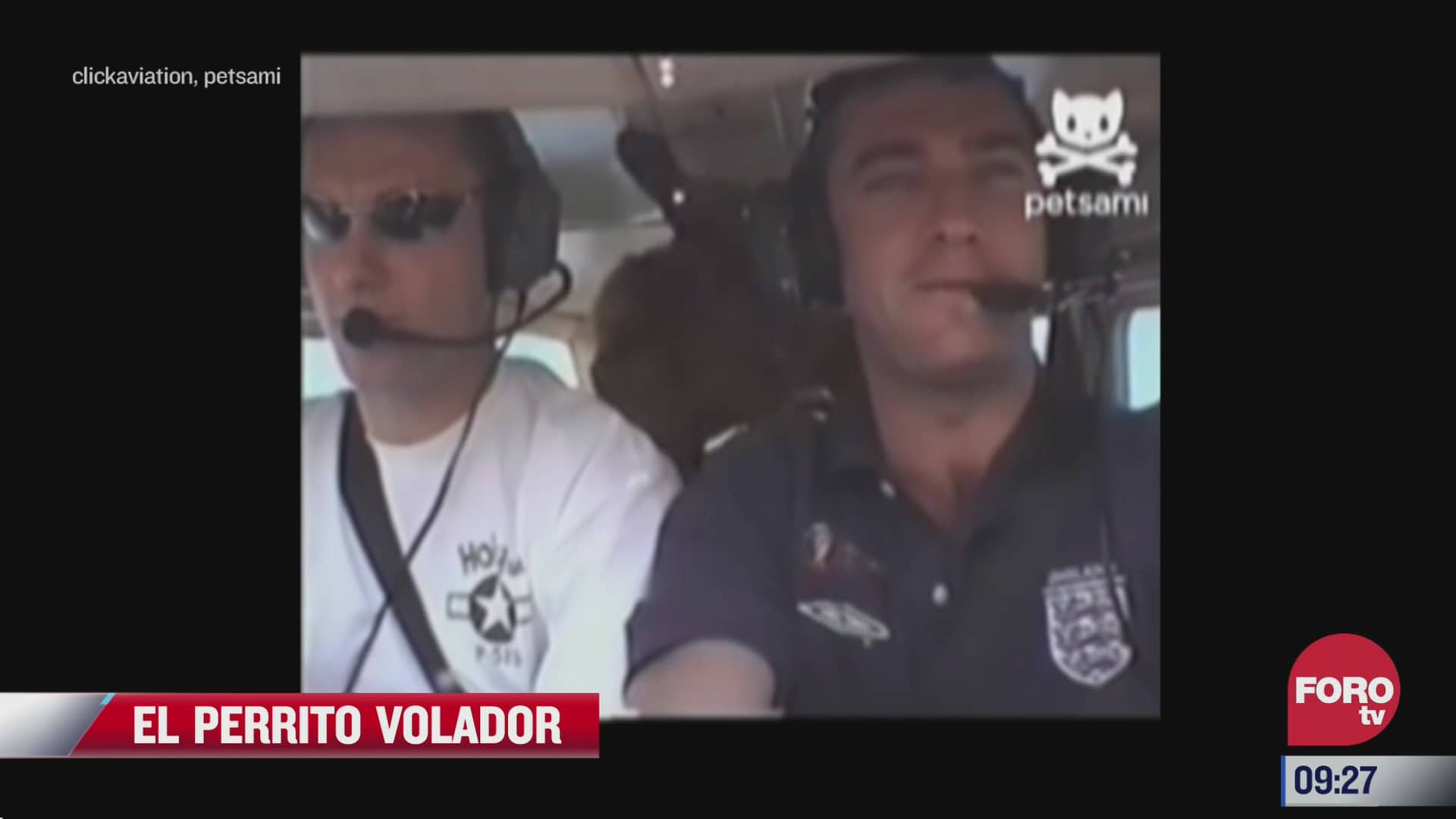 perrito vuela tras descenso de un avion