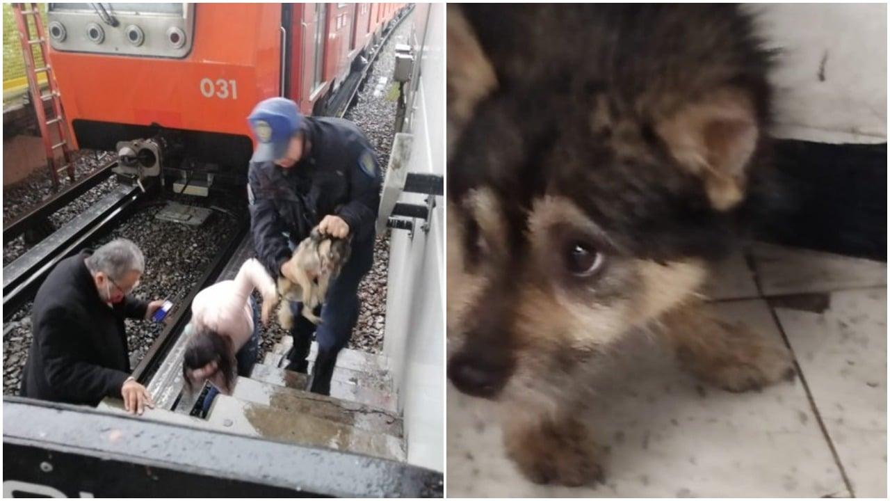 perros, Metro, línea B, rescate, Twitter