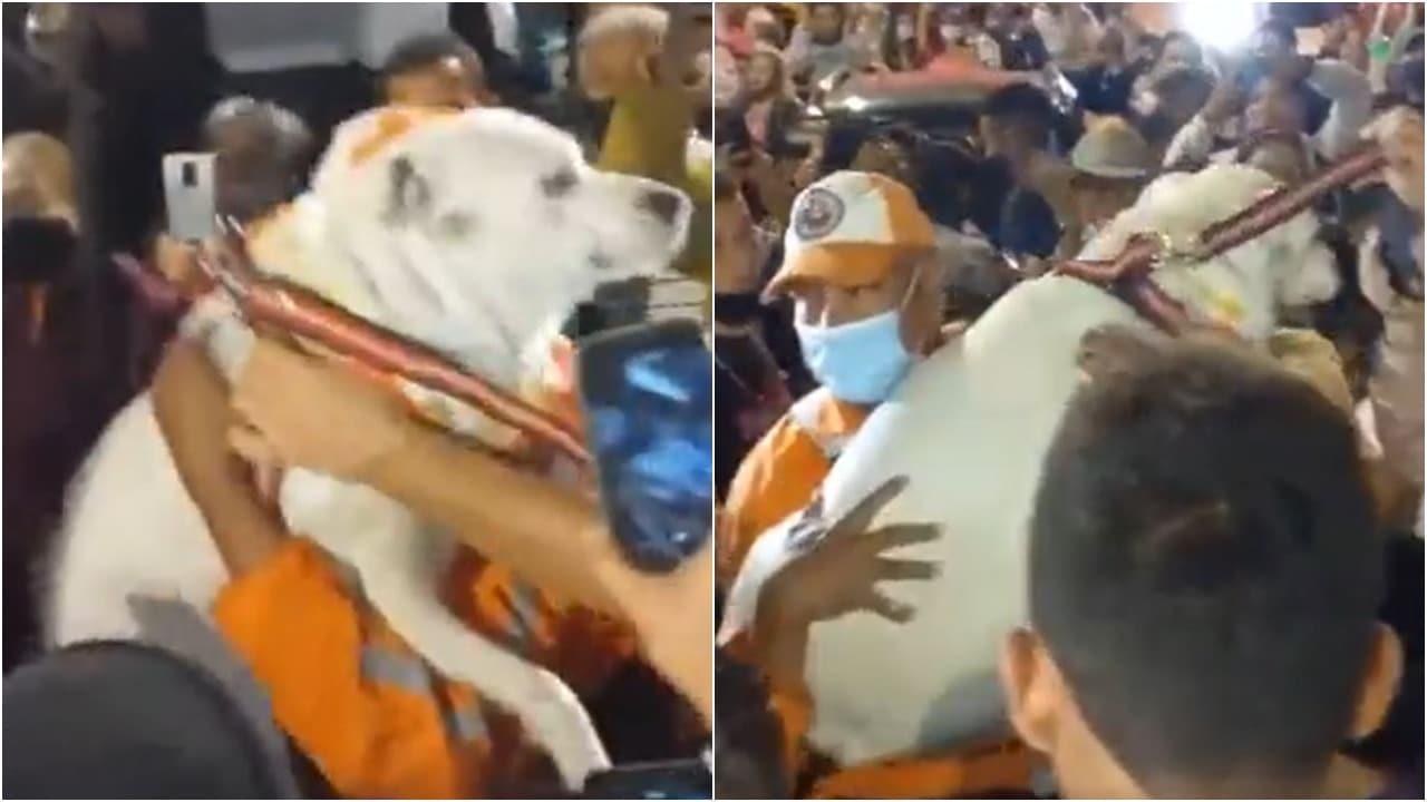 Perro Beethoven genera fiesta en Santa Bárbara tras su rescate