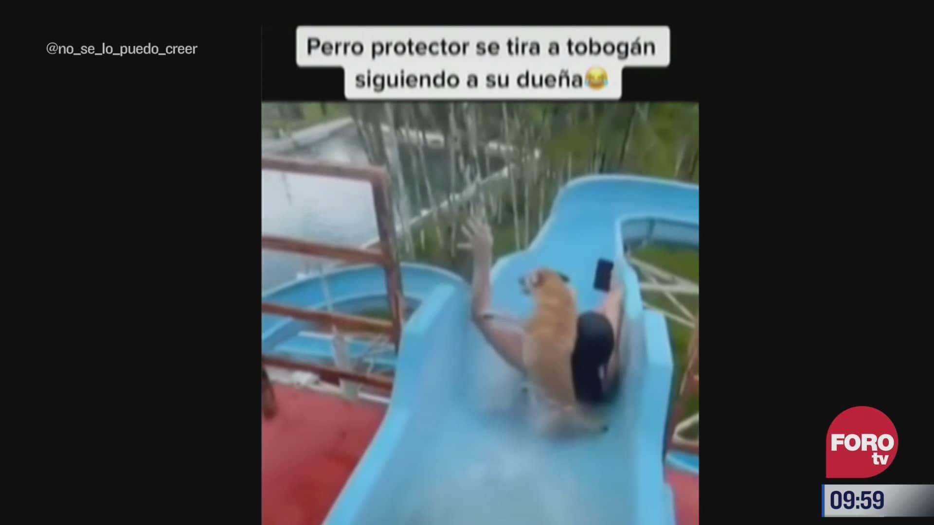 perro se lanza por tobogan