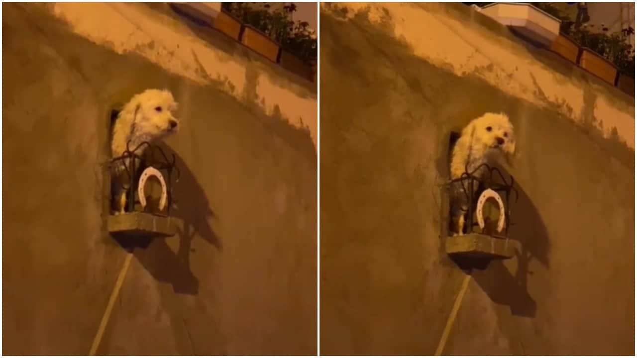 perros, balcón, video viral, TikTok, captura de pantalla