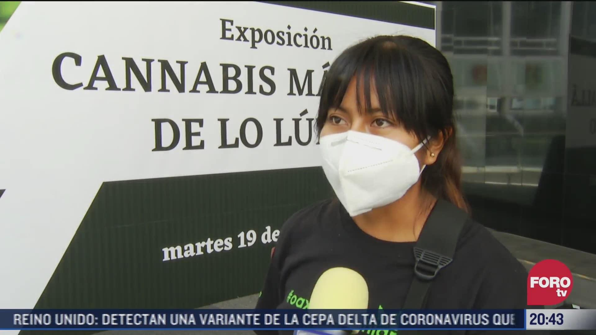 productora de derivados de cannabis presenta productos en el senado