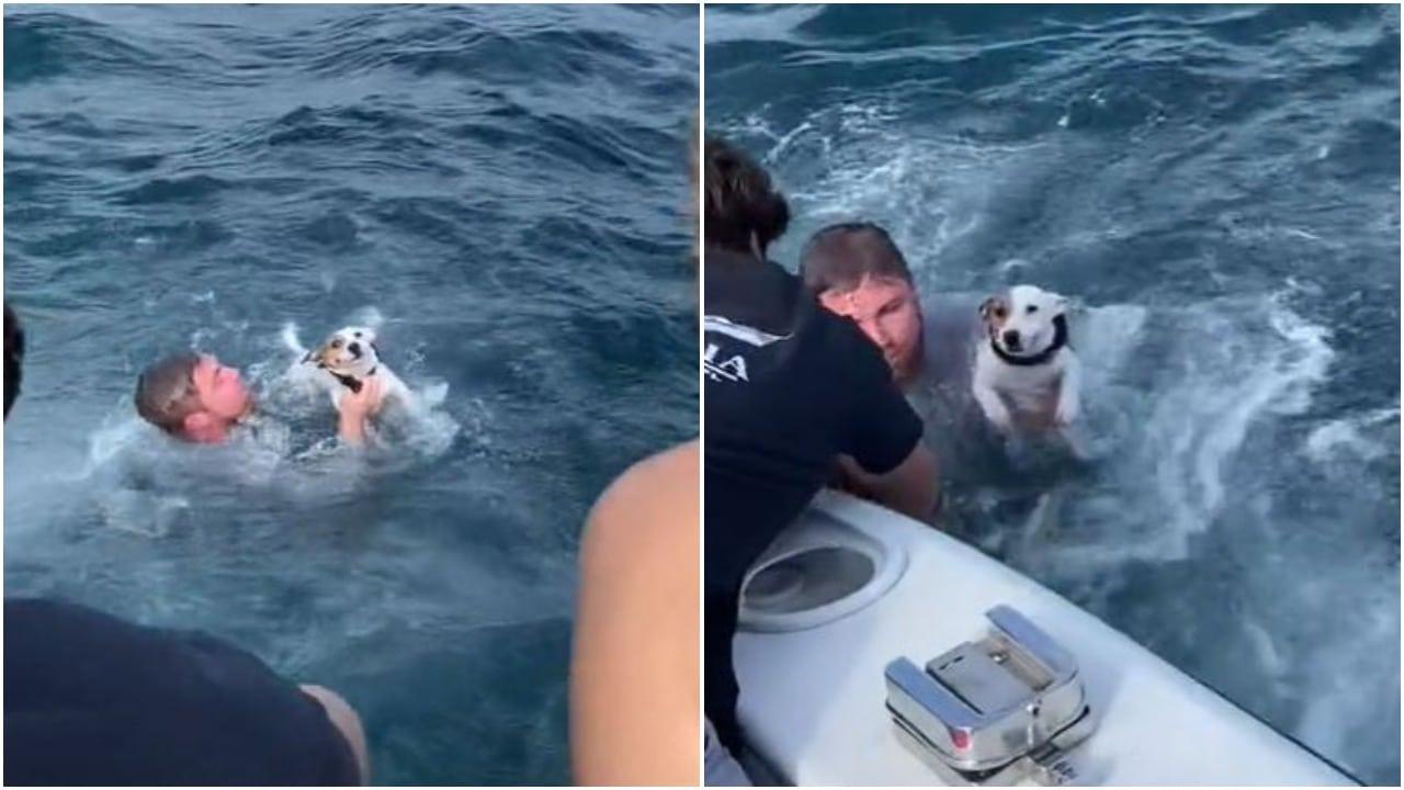 Rescate de perro Zuko en el océano de Florida se vuelve viral