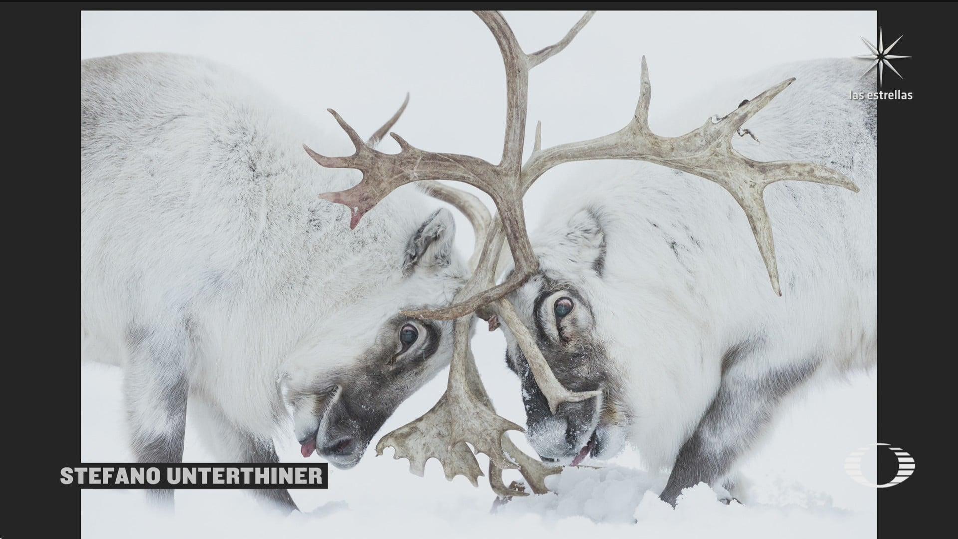 revelan nombres de los ganadores del fotografo de vida silvestre del ano