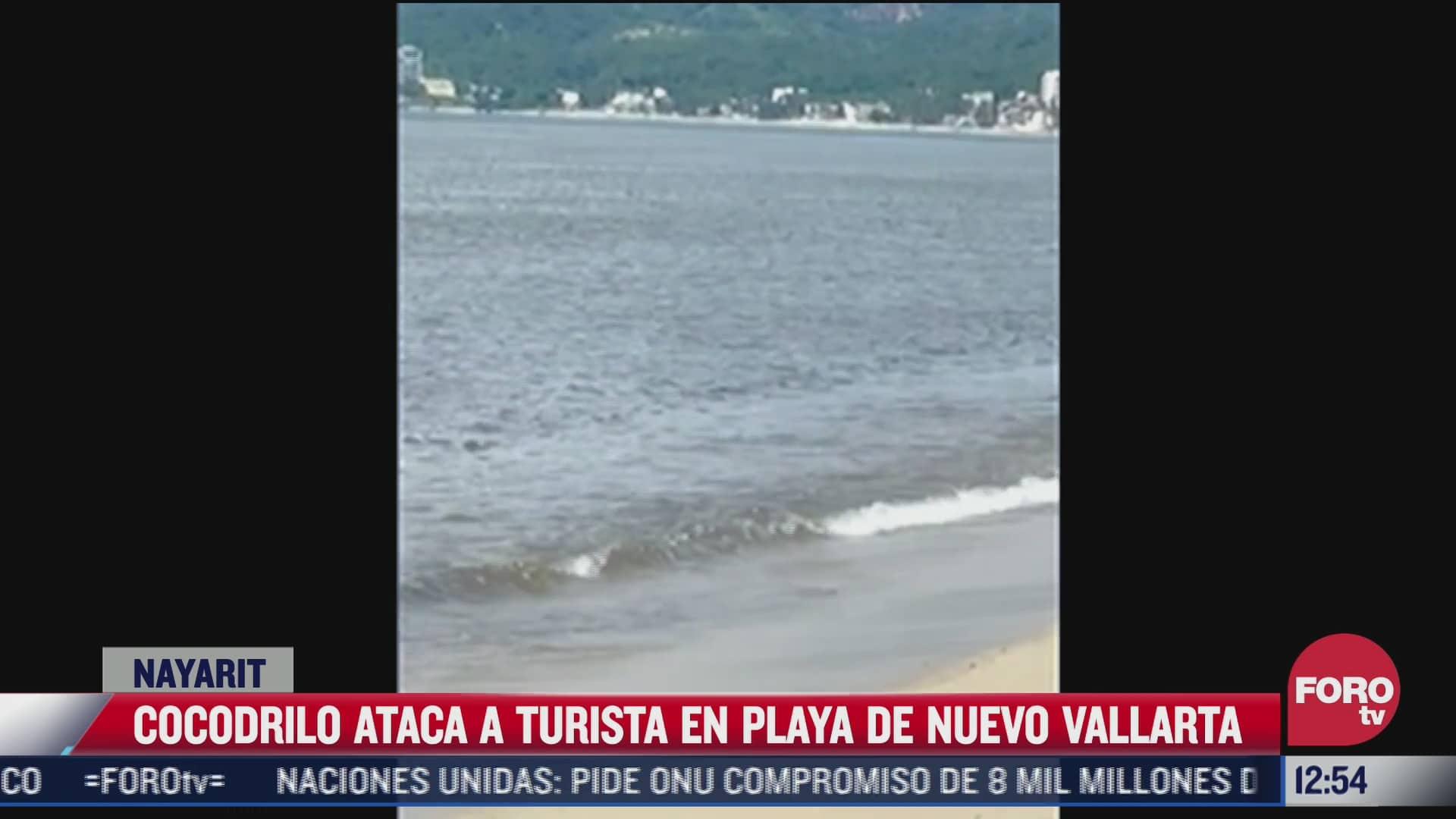 turista es atacado por cocodrilo en una playa de nuevo vallarta nayarit